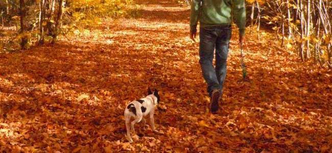 Choisir le bon éducateur canin