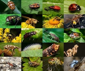 extermination insecte